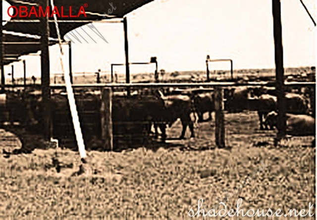raschel mesh obamalla used for protect the cows.