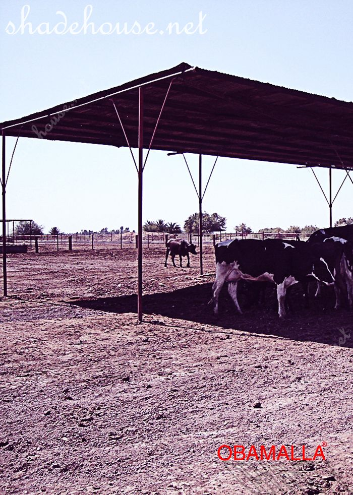 shade cloth protecting cows of the high temperatures.