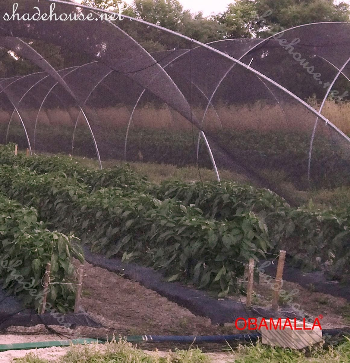 shade cloth provide protection on the crops field.