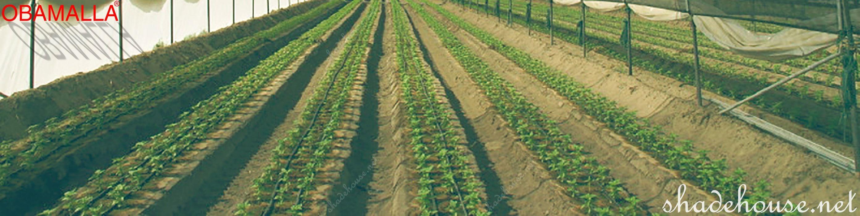 raschel mesh taking care crops field.