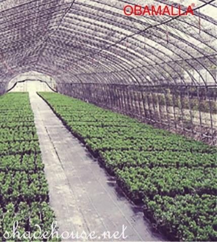 shadehouse obamalla protecting crops.